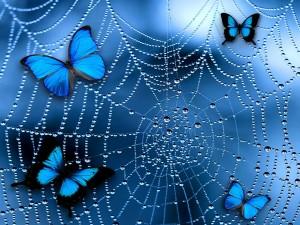 Mariposas en una telaraña