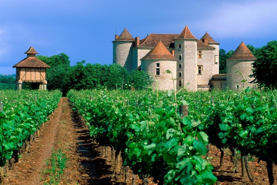 Castillo rodeado de parras