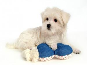 Encantador cachorro blanco