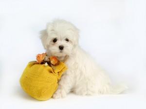 Perrito blanco junto a un saquito de flores