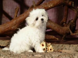 Un encantador perrito posando para la foto