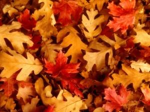 Variedad de hojas otoñales