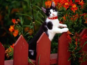 Gato blanco y negro en una valla roja