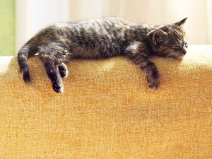Un gato dormido en lo alto del sofá