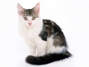 Un pequeño gato de cola negra