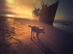 Un perro caminando en la playa