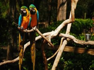 Atractivos guacamayos sobre la rama de un árbol