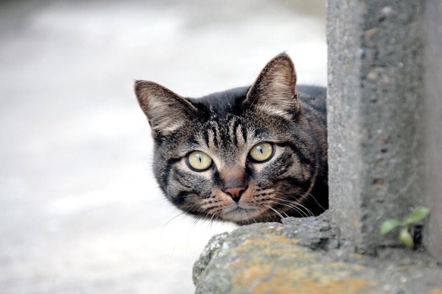 Un gato vigilando
