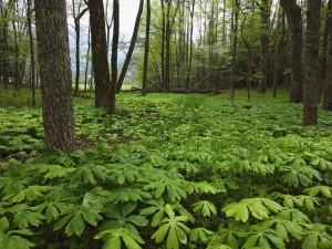Bonito bosque verde