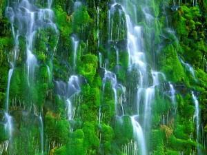 Agua cayendo sobre la pared de musgo