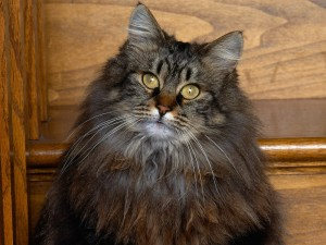 Gato con largos bigotes