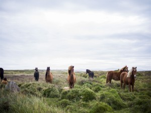 Manada de caballos entre el pasto verde