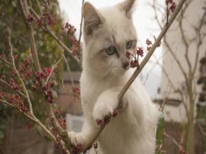 Gato sobre unas ramas con flores