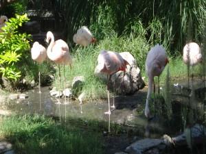 Varios flamencos en un estanque