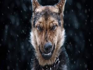 Perro con cara de enojado