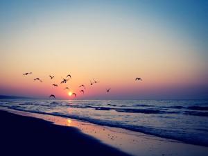 Pájaros volando sobre la playa a la salida del sol