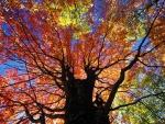 Hermoso árbol en otoño