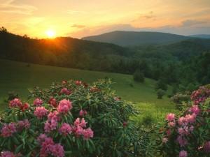 Sol iluminando las flores