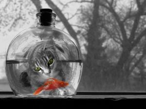 Gato observando al pez