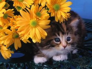 Gatito bajo unas margaritas