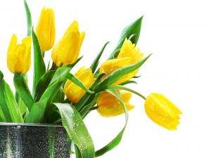 Recipiente con tulipanes amarillos