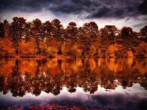 Árboles de otoño reflejados en el agua