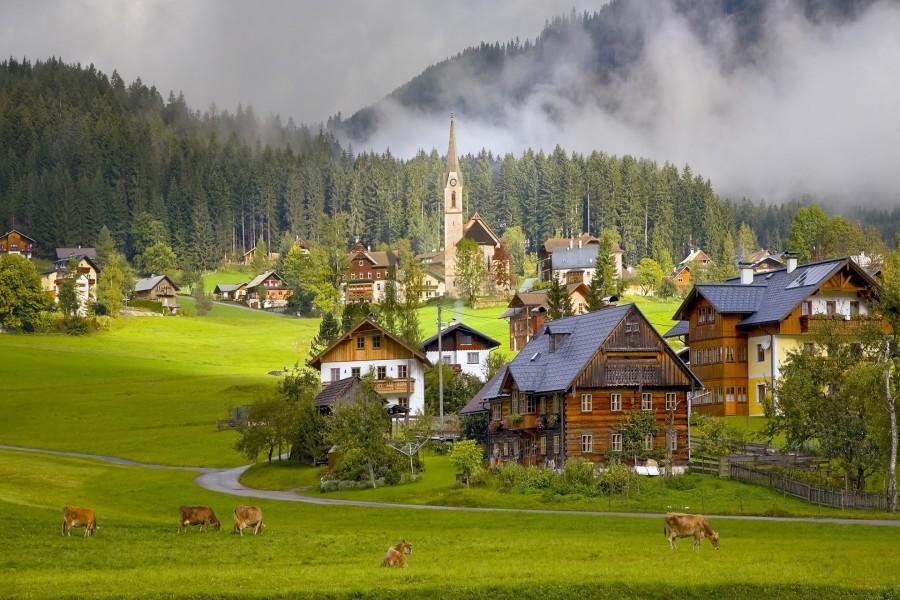 Vacas comiendo hierba fresca cerca de una aldea