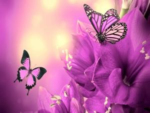 Mariposas volando sobre unas flores iluminadas por el sol
