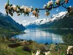Ramas en flor a orillas del lago