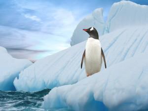 Un pingüino solitario
