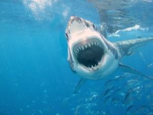 Tiburón hambriento