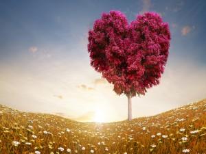 Sol iluminando el árbol corazón