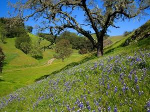 Primavera en el campo