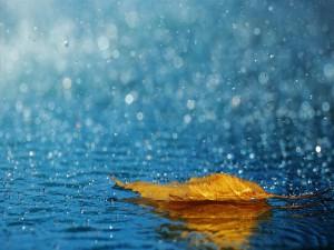 Lluvia sobre una hoja de otoño