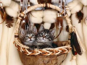 Gatitos dentro de una bonita cesta