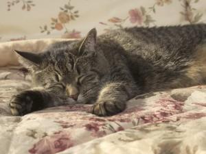Gato durmiendo sobre la cama