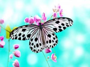 Mariposa posada en unas florecillas rosas