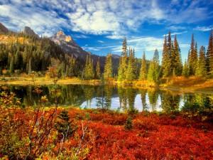 Pequeño lago en otoño
