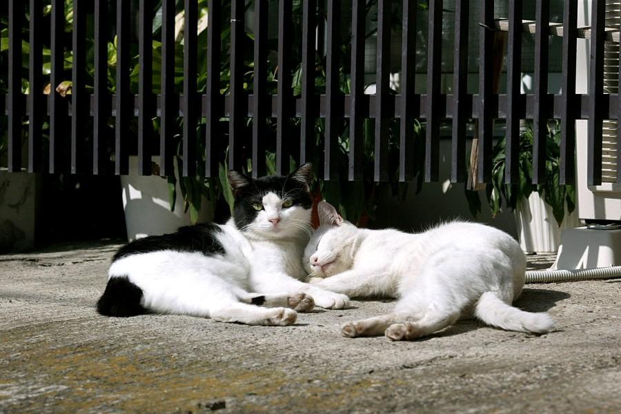 Gatos tumbados al sol