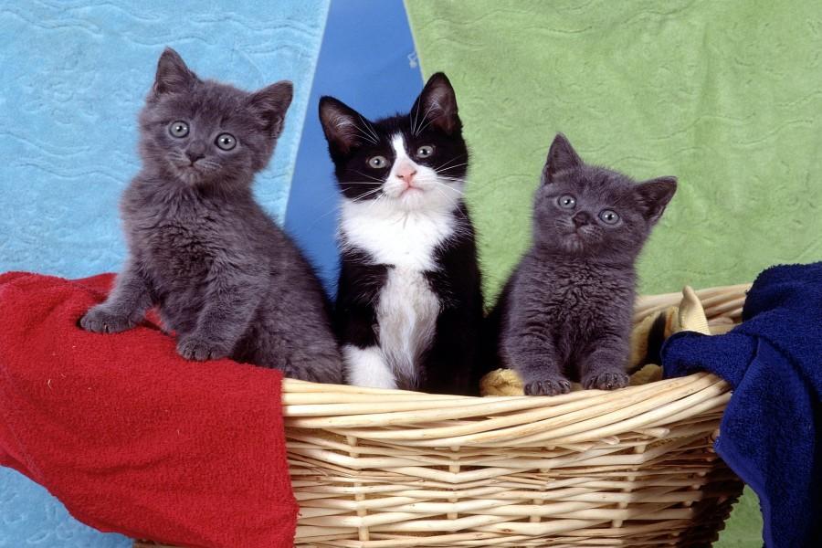 Tres gatitos en una cesta