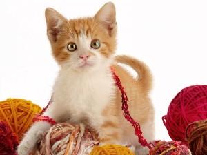 Gatito jugando entre los ovillos de lana
