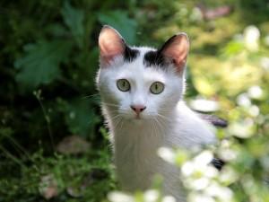 Un gato entre las plantas