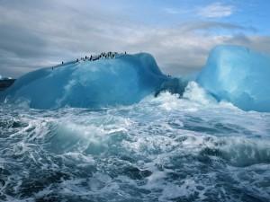Pingüinos en un iceberg de la Antártida
