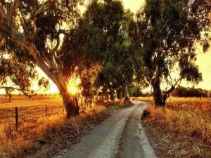 Camino rural en Australia
