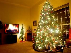 Varios árboles de Navidad en un salón