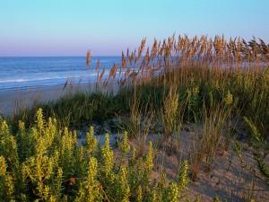 Plantas junto a la playa