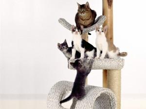 Gatos jugando en una plataforma