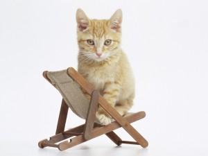 Gato sobre una pequeña silla