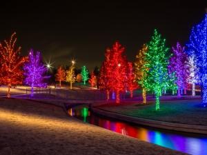 Luminosos árboles navideños al anochecer