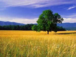 Un árbol verde en el campo